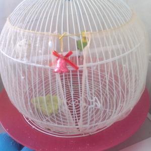 продам 2 волнистых попугай с клеткой