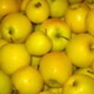 Продам яблоки и картофель собственного производства,  оптом